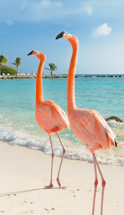 Indalo-Space-Les-iles-autrement-Bonaire