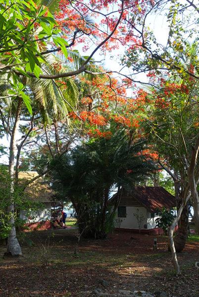 Indalo_Mayotte_Jardin Maore_Jardin